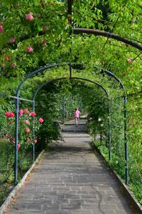 Arco in ferro battuto con piante di rose rampicanti